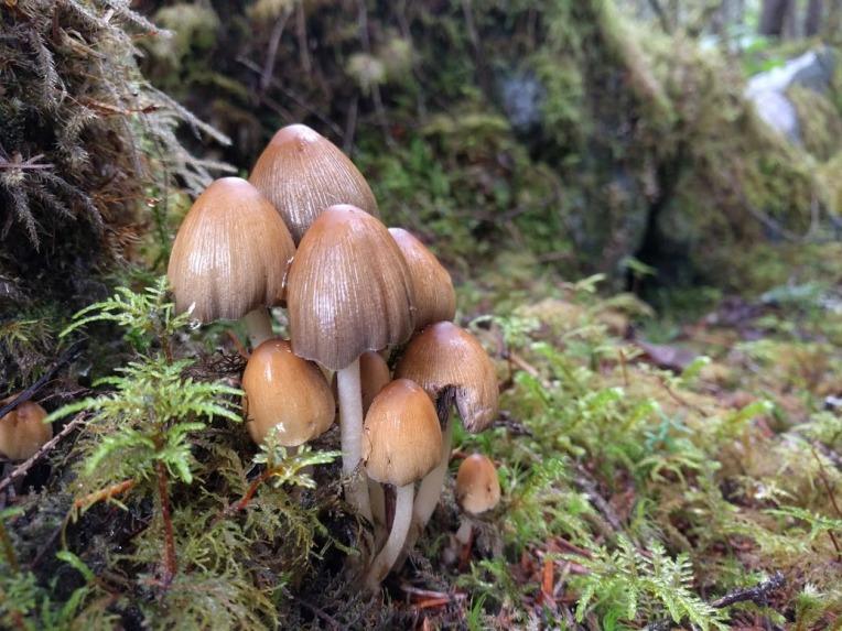 shrooms-on-hike