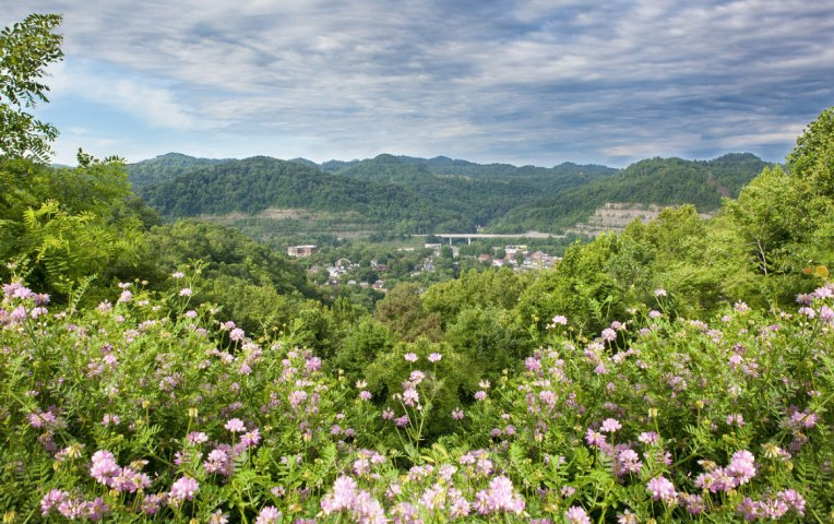 hazard-ky-view-flowers