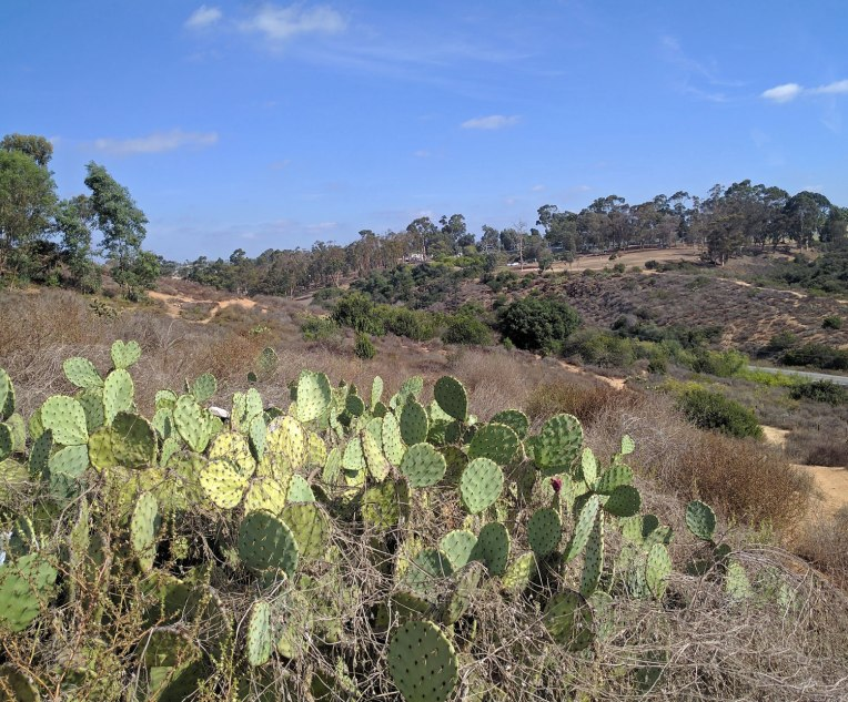 cactus-hike