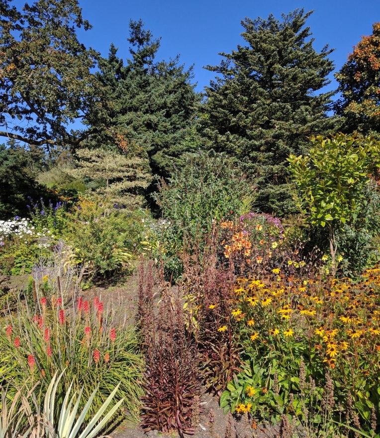 flowers-plants-beacon-hill-park