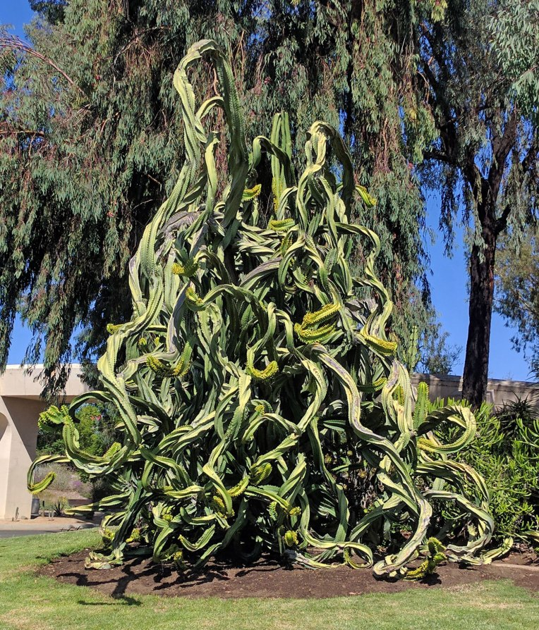 funky-cactus
