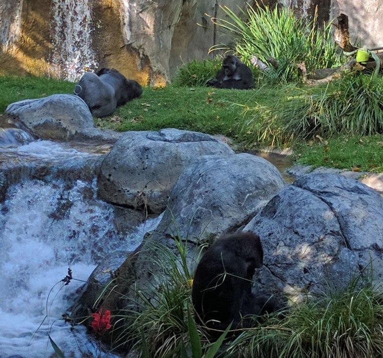 primates-san-diego