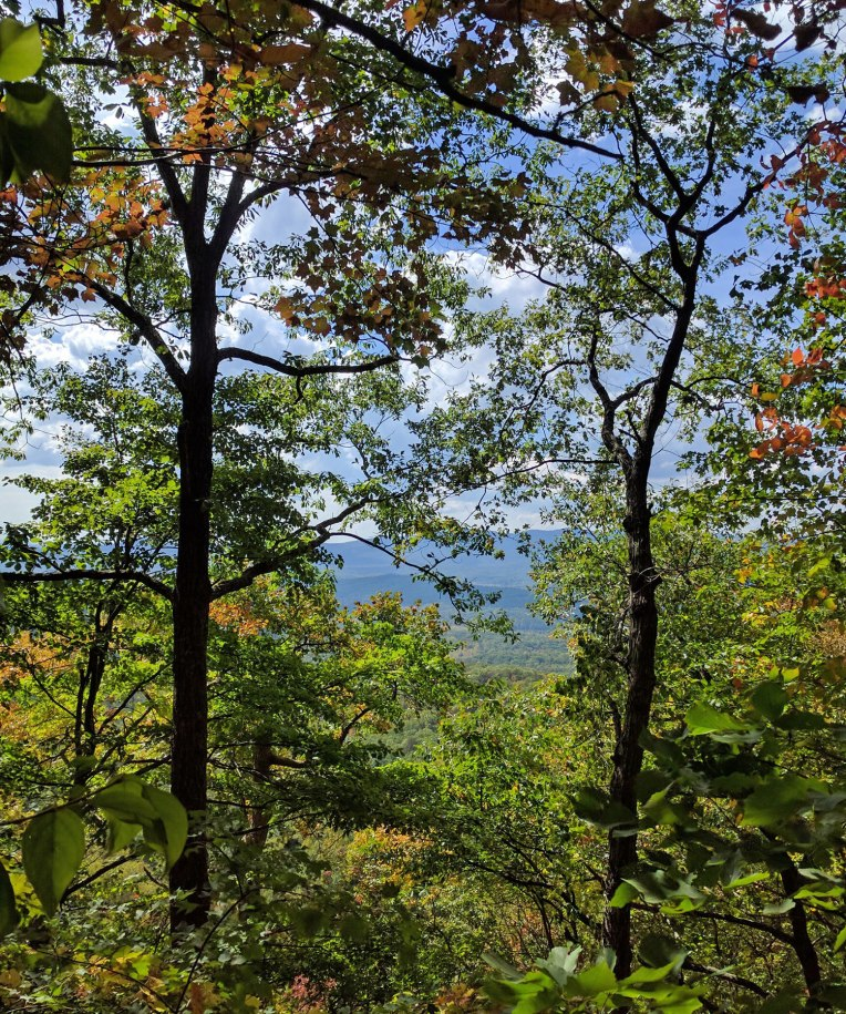 amicalola-falls-forest