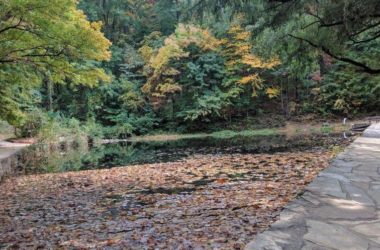 amicalola-falls-pond