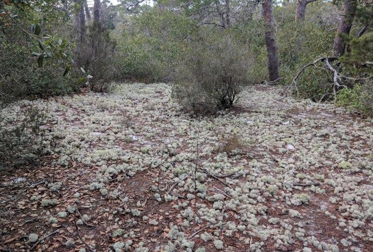 deer-moss-field