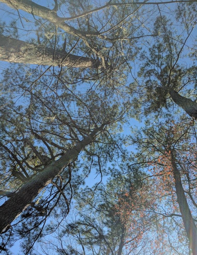 three-lakes-trees